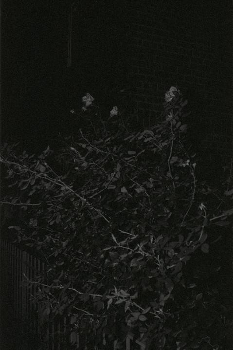 nocturne-6.jpg