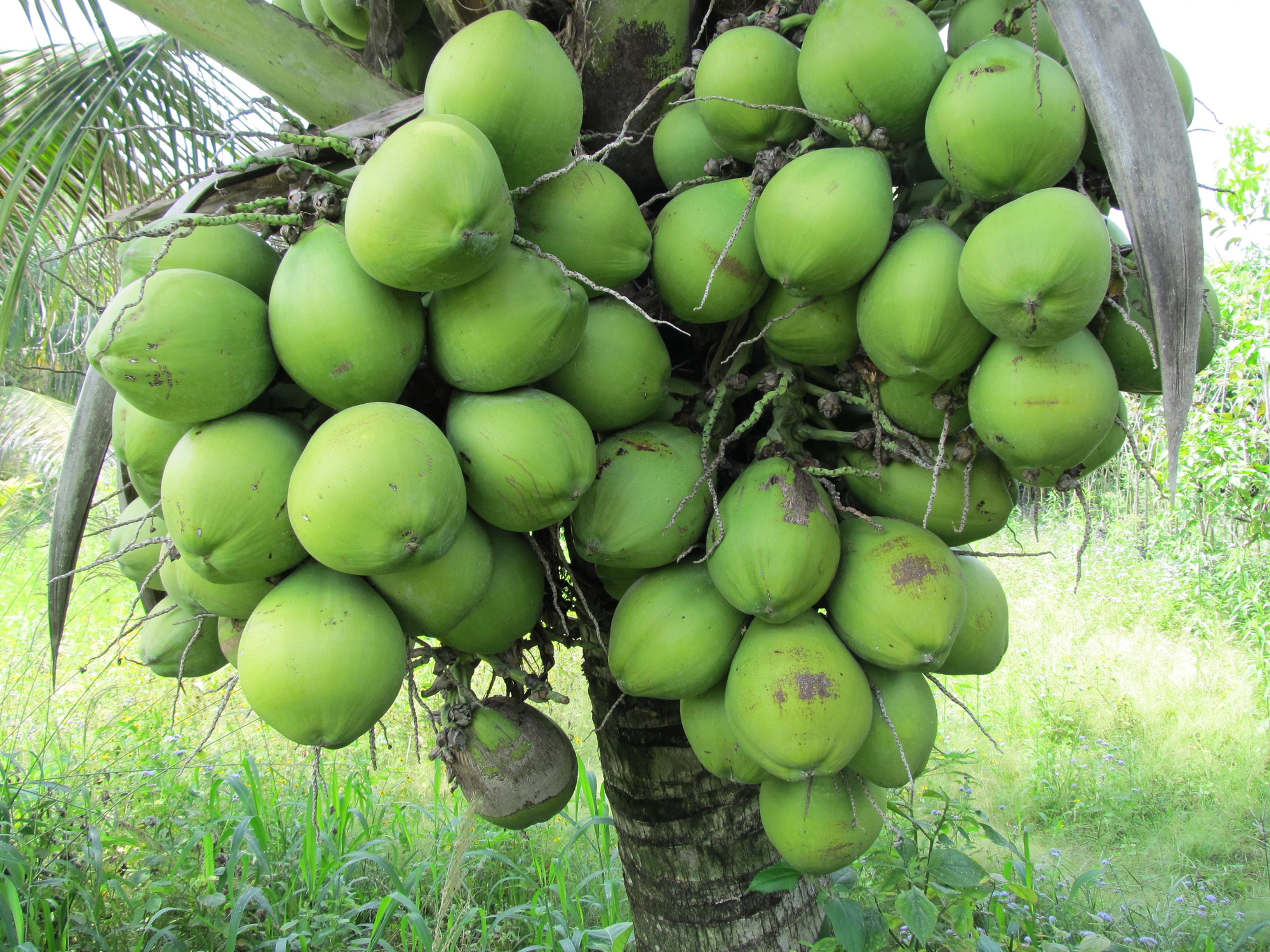 Vivero monte lindo el salvador rboles frutales for Viveros frutales