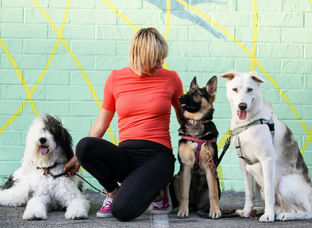 Interview with Jill Guin, Dog Trainer and Founder of Underdogs Long Beach