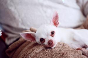 Dog Arthritis Help Santee San Diego Cuyamaca Animal Hospital Veterinarian