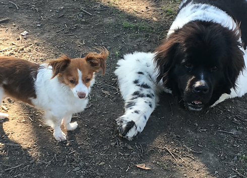 Colee's Pet Care dog walking and pet sit