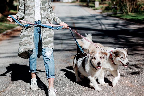 best dog walker in Atlanta