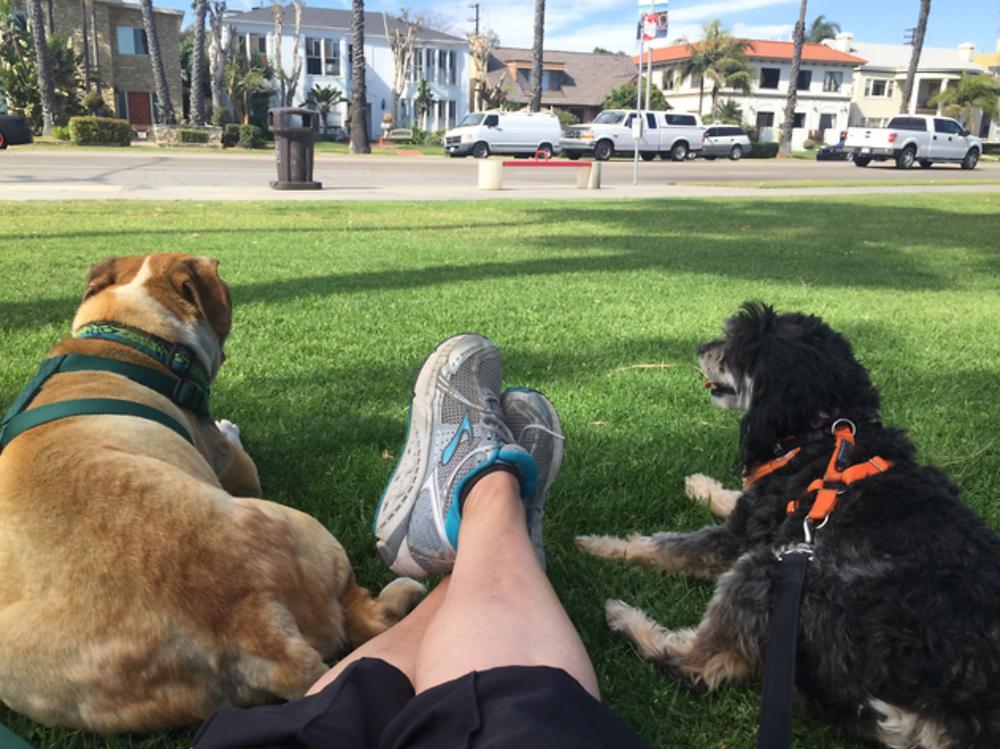 Long Beach Pet Friendly Activities