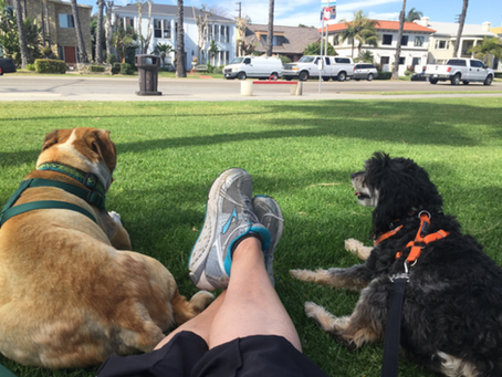 Explore the Long Beach Outdoors with Recommendations from the Owner of Pet Waggin' Pet Care