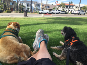 Long Beach Pet Friendly Activities