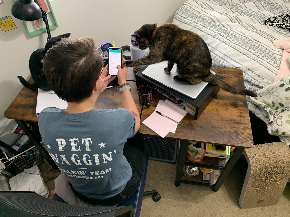 pet sitter schedule in Long Beach _ Pet Waggin Pet Care
