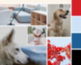 VIPuppy Spa Mood Board doggie daycare branding