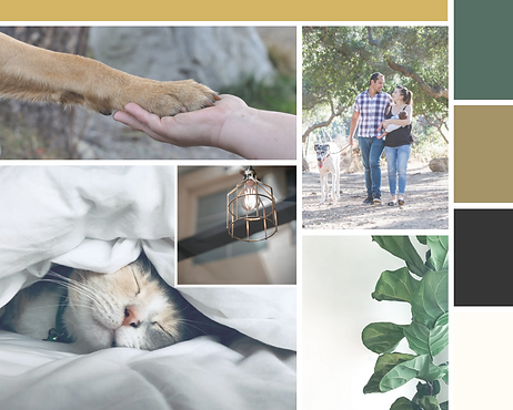 dog walking and pet sitting purrs and grrrs mood board branding project