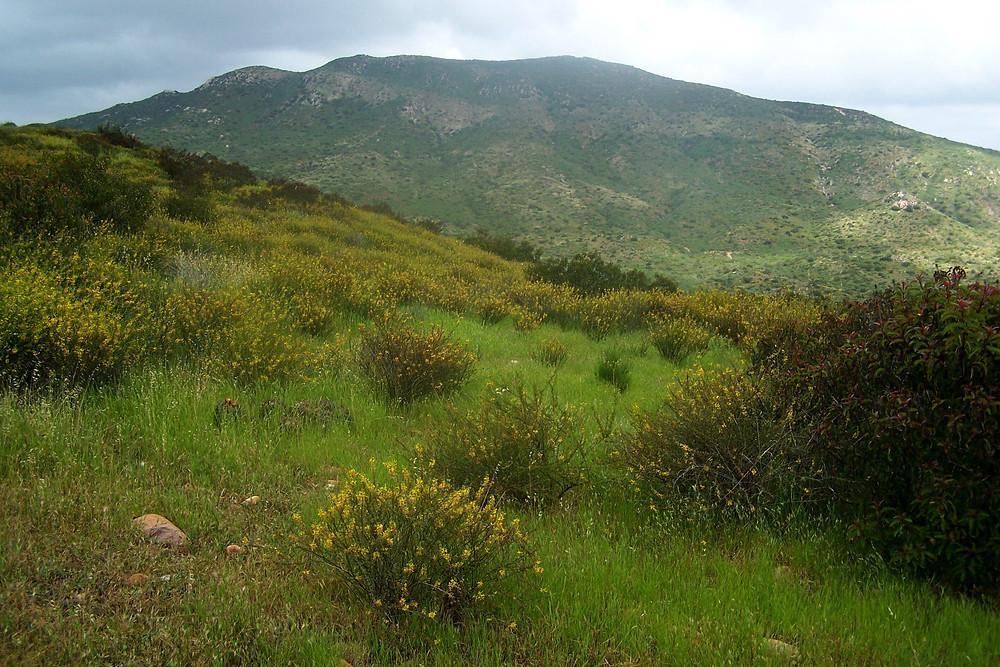 Summer Hikes In San Diego | Santee | Cuyamaca Animal Hospital | Pet-Friendly Hikes In San Diego