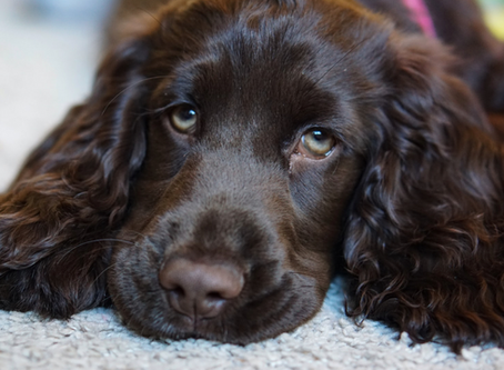 Everything You Need to Know about Pet Cystotomy