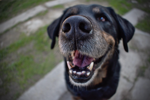 dental disease in dogs | cuyamaca animal hospital | santee, san diego