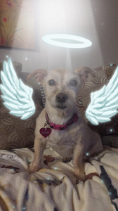 365 Days Later: Grieving The Loss of My Dog, Maggie | Pet Marketing Unleashed