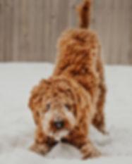 pet care in Yellowknife