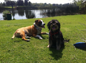 El Dorado East Regional Park in Long Beach - Dog-Friendly