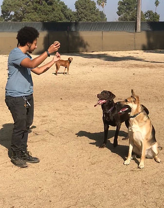 Dog trainer Noah playing with two obedient dogs in a park