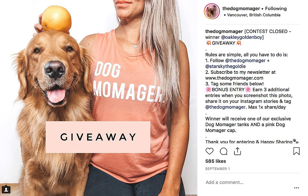 33 Creative Instagram Post Ideas For Your Pet Business | Pet Marketing Unleashed