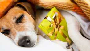 Pet Waggin's Pet Holiday Gift Guide to Long Beach Businesses and Artists