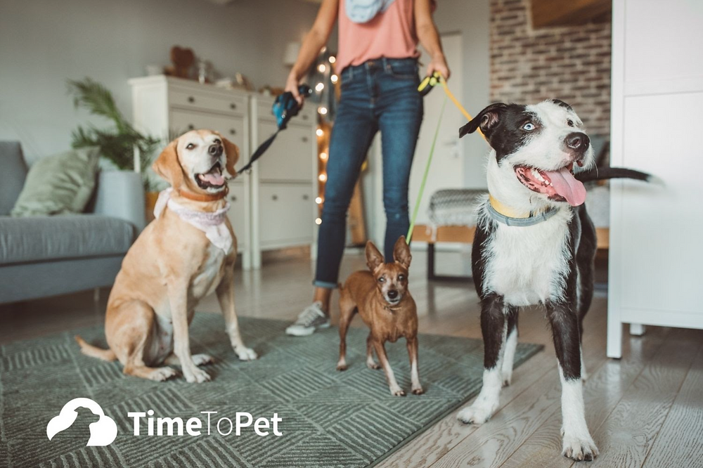 Time To Pet - three dogs on leashes - how to boost productivity in my pet business - Pet Marketing Unleashed