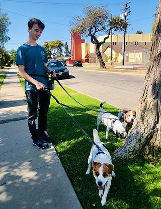 Max and Krippner pups (1).jpeg