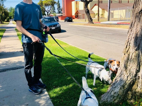[Videos Inside] An Inside Look At Pet Waggin's Staff Training: Mastering The Dog Walk