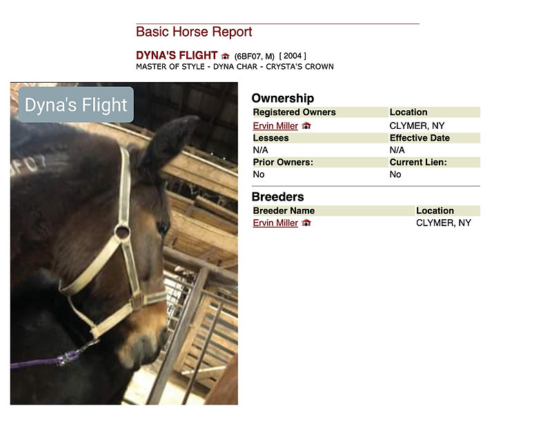 Dyna's flight BIO.jpg