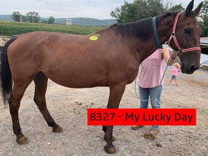 8327 - My Lucky Day (1).jpg