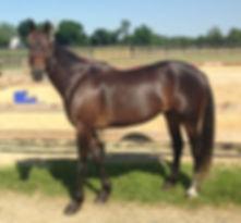 Foster an SRF horse