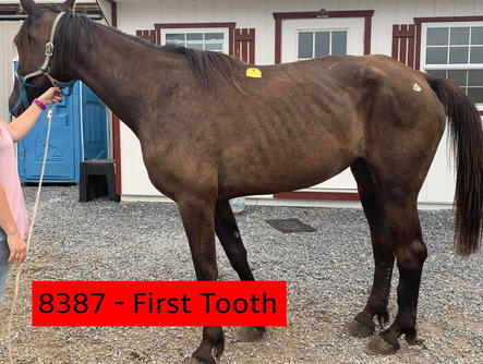 8387 - First Tooth.jpg