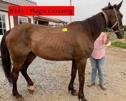 8341 - Magic Crossing (1).jpg