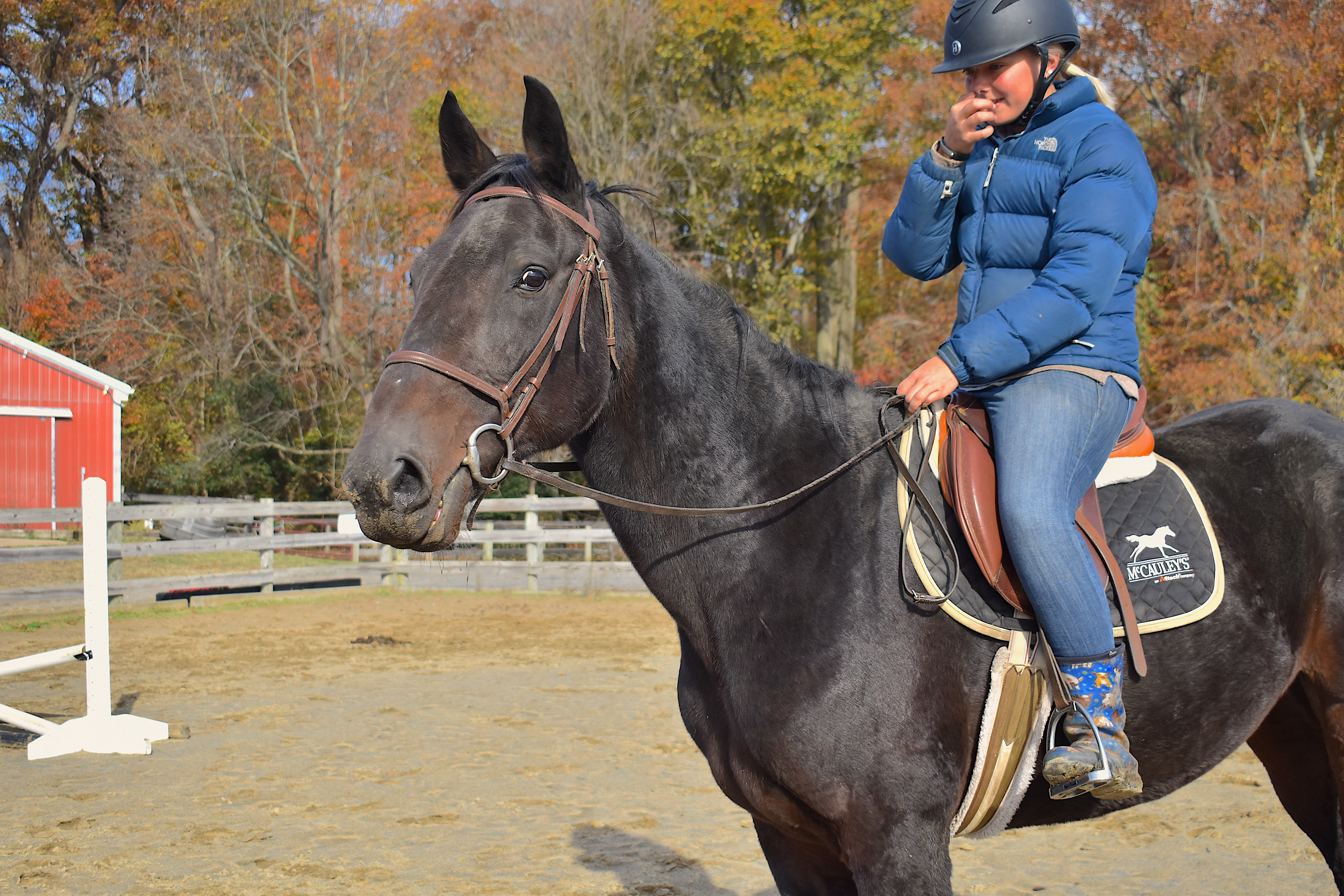 Big Boy Toz (under saddle 1)