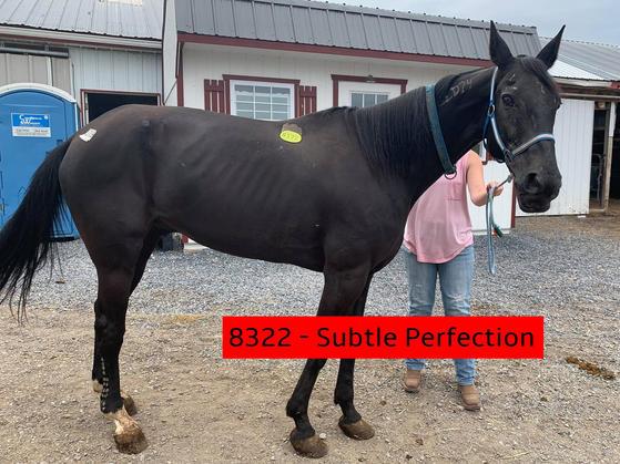 8322 - Subtle Perfection (1).jpg
