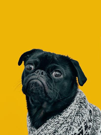 Top 10 best free pet apps