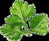 h1-parsley.png