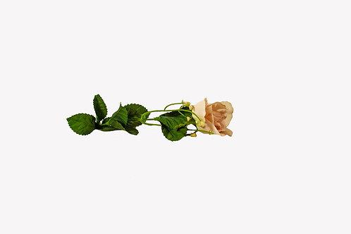Zacht rose roos op steel