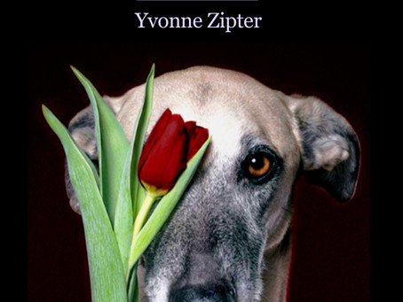 Nina Bennett reviews Yvonne Zipter's Kissing the Long Face of the Greyhound