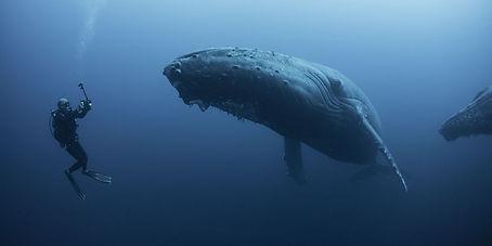 humpback-whale-diver-1531325722.jpeg