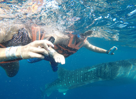 I Swam With The Biggest Fish In The Sea