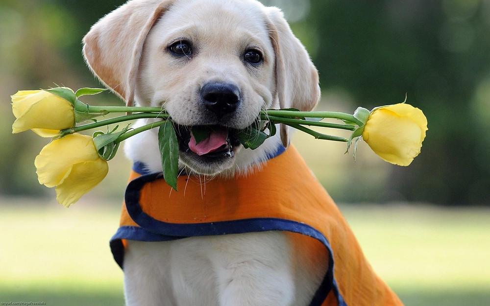 jardins para Pet cuidado com planta toxica