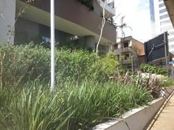 Jardinagem Construcao