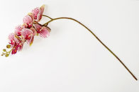 Vertical_Garden_-_JVAI28_1_-_foto_Sim∆
