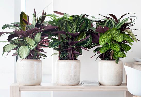 Vasos de plantas para escrtirórios
