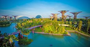 Arquitetura biofílica: Entenda os conceitos aplicados nas cidades, residências e corporações