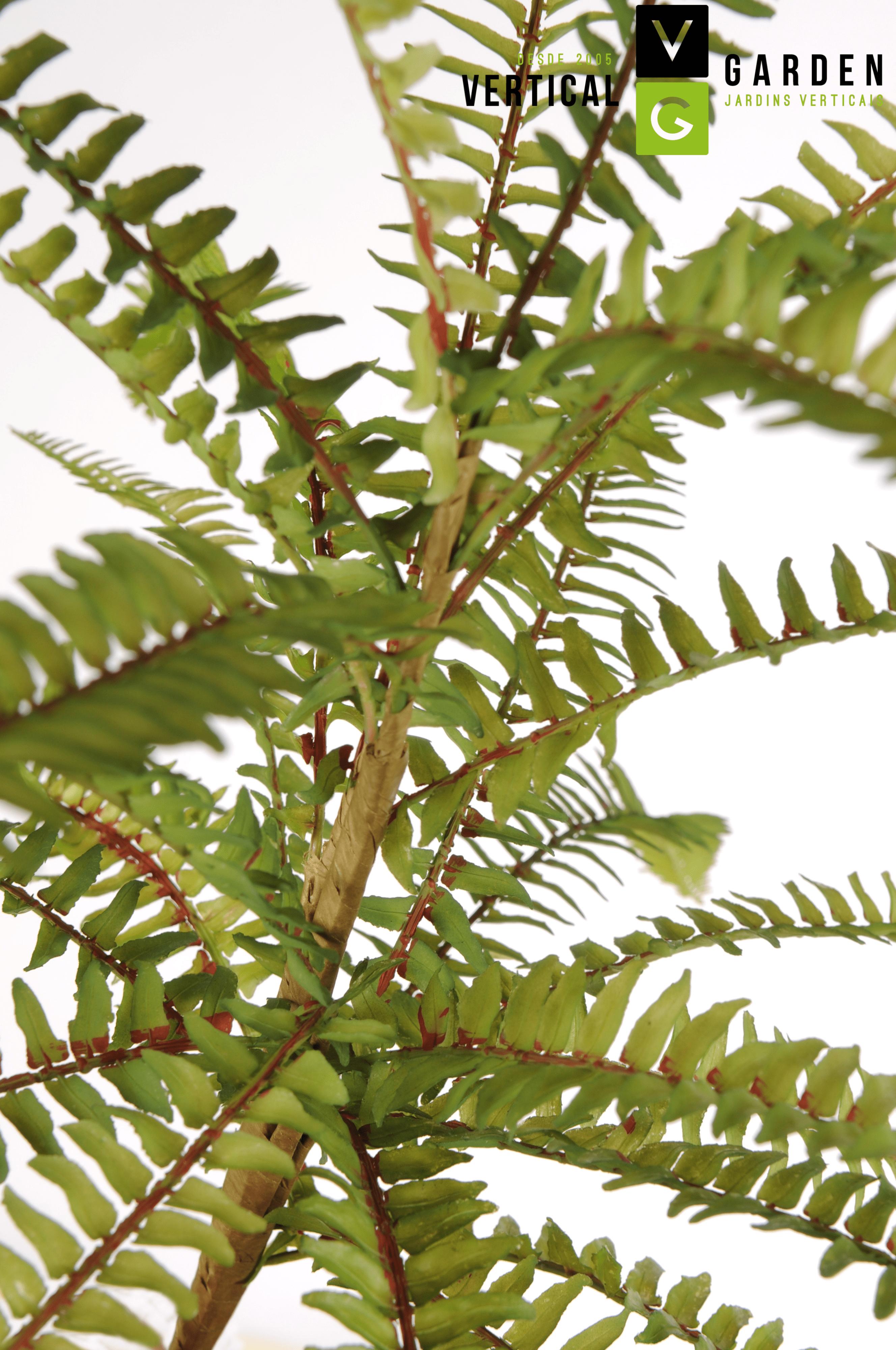 Planta Permanente Vertical Garden-min