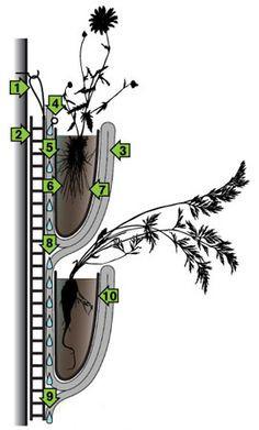 Cuidado Irrigação Parede Verde