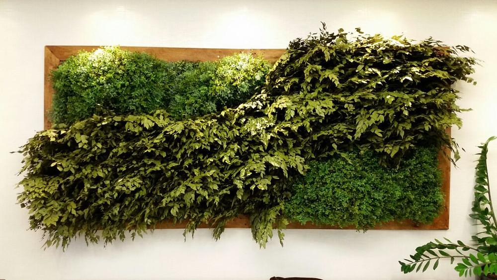 Plantas para apartamento em parede