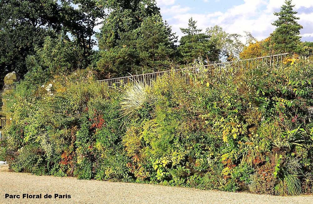 Jardim Vertical Patrick Blanc
