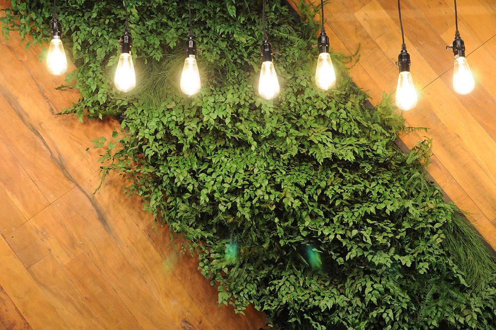 Plantas para Restaurante