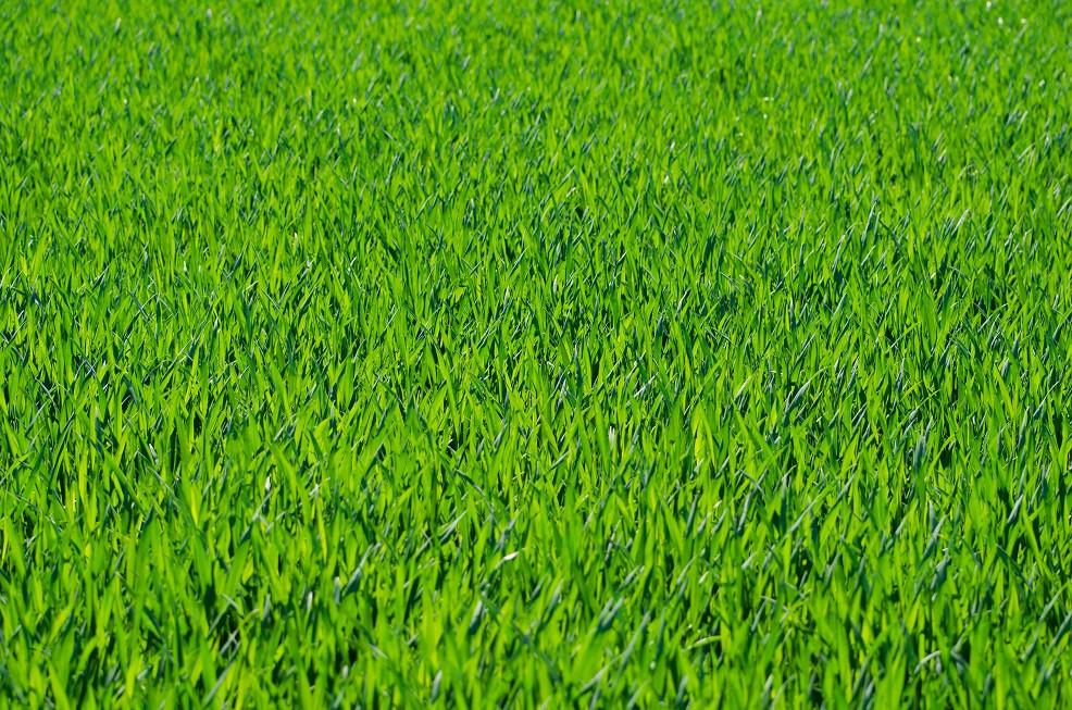 planta para telhado verde extensivo grama sao carlos