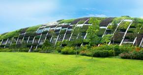 Dicas: plantas ideais para telhado verde extensivo