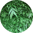 Detalhe de Jardim Vertical Preservado - Folhas